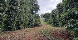 Nhà có mảnh đất 5 ha tại xã EaTân – Krông Năng...